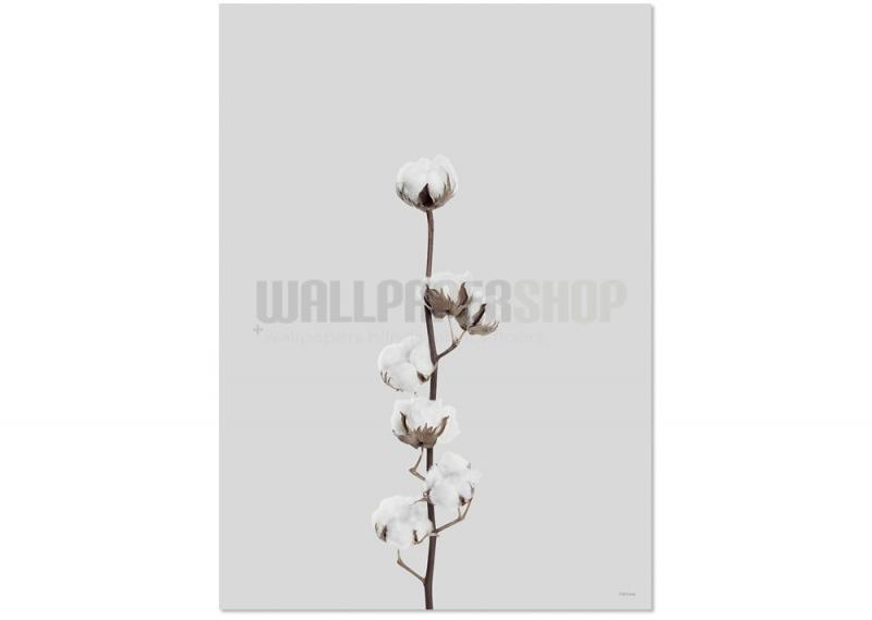 Cotton Flower ΠΟΣΤΕΡ No 47148