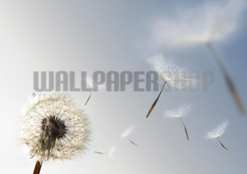 Digital Walls Dandelion Blowing Seeds No 4945