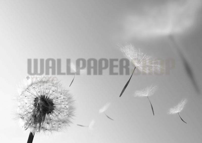 Digital Walls Dandelion Blowing Seeds No 4946