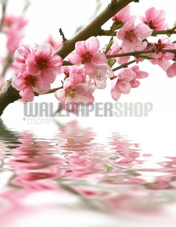 Digital Walls Peach Flowers No 5131