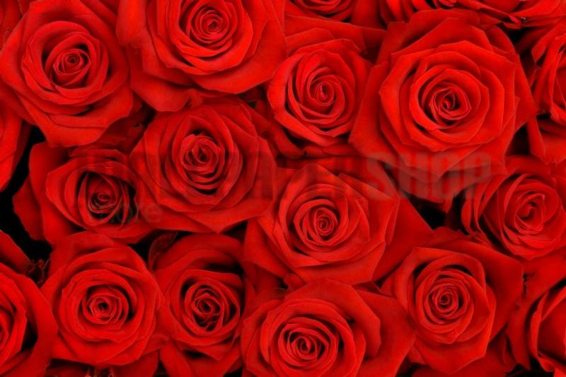 Digital Walls Red Roses No 5134