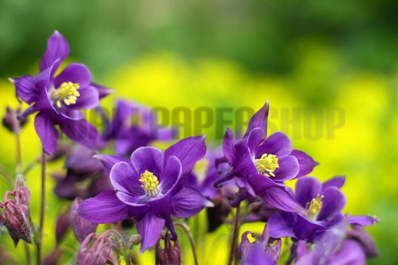 Digital Walls Purple Flowers No 5607