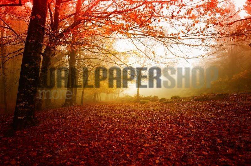 Autumn Colors No 11129
